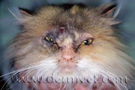 Most Common Cause Of Ringworm In Dogs And Cats