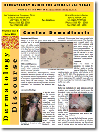 Dermatology Clinic For Animals 187 Newsletters